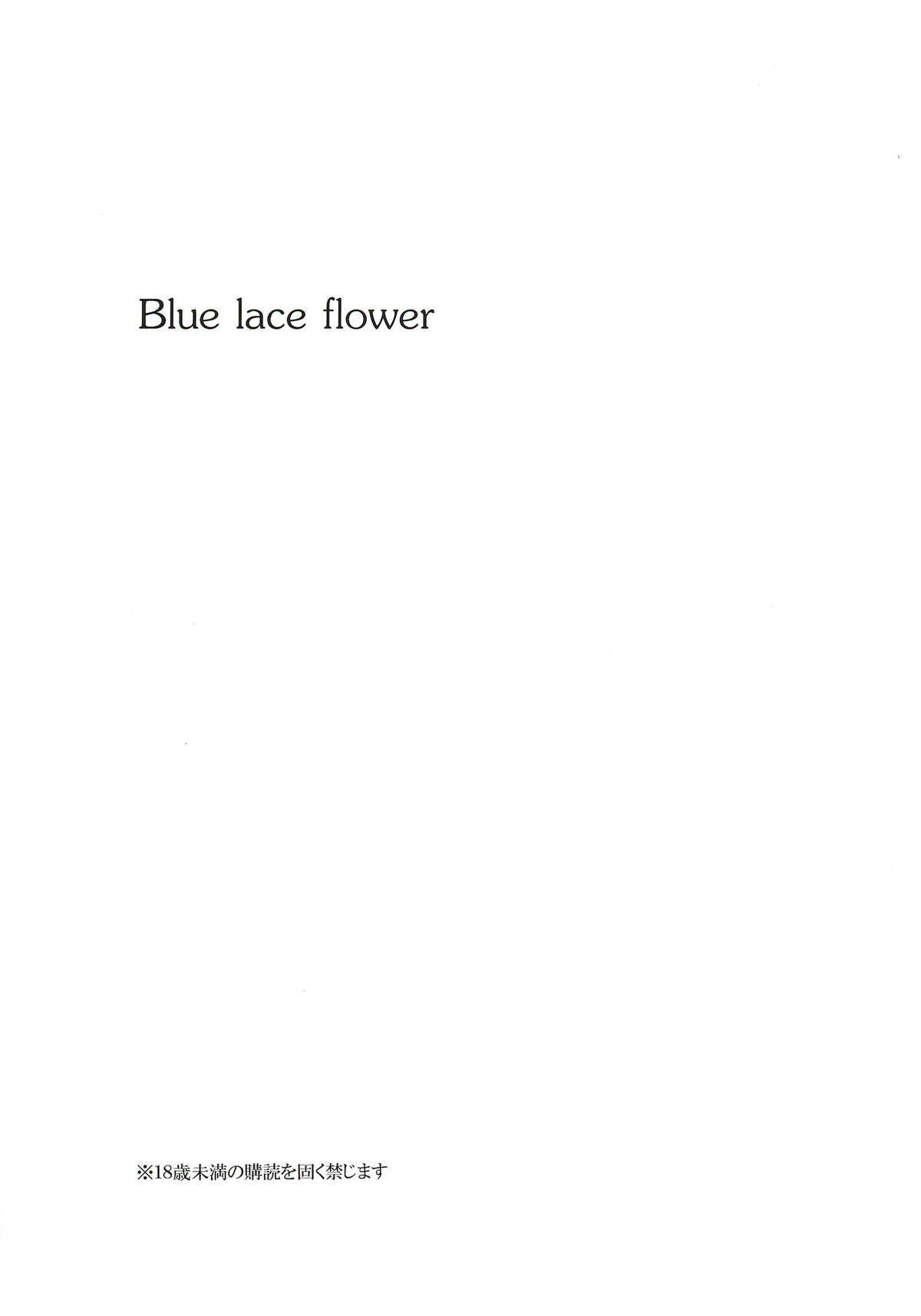 Blue lace flower 2